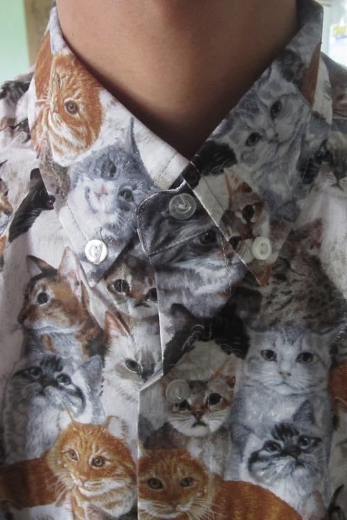FOFIRA DO MÊS: Cat's shirt
